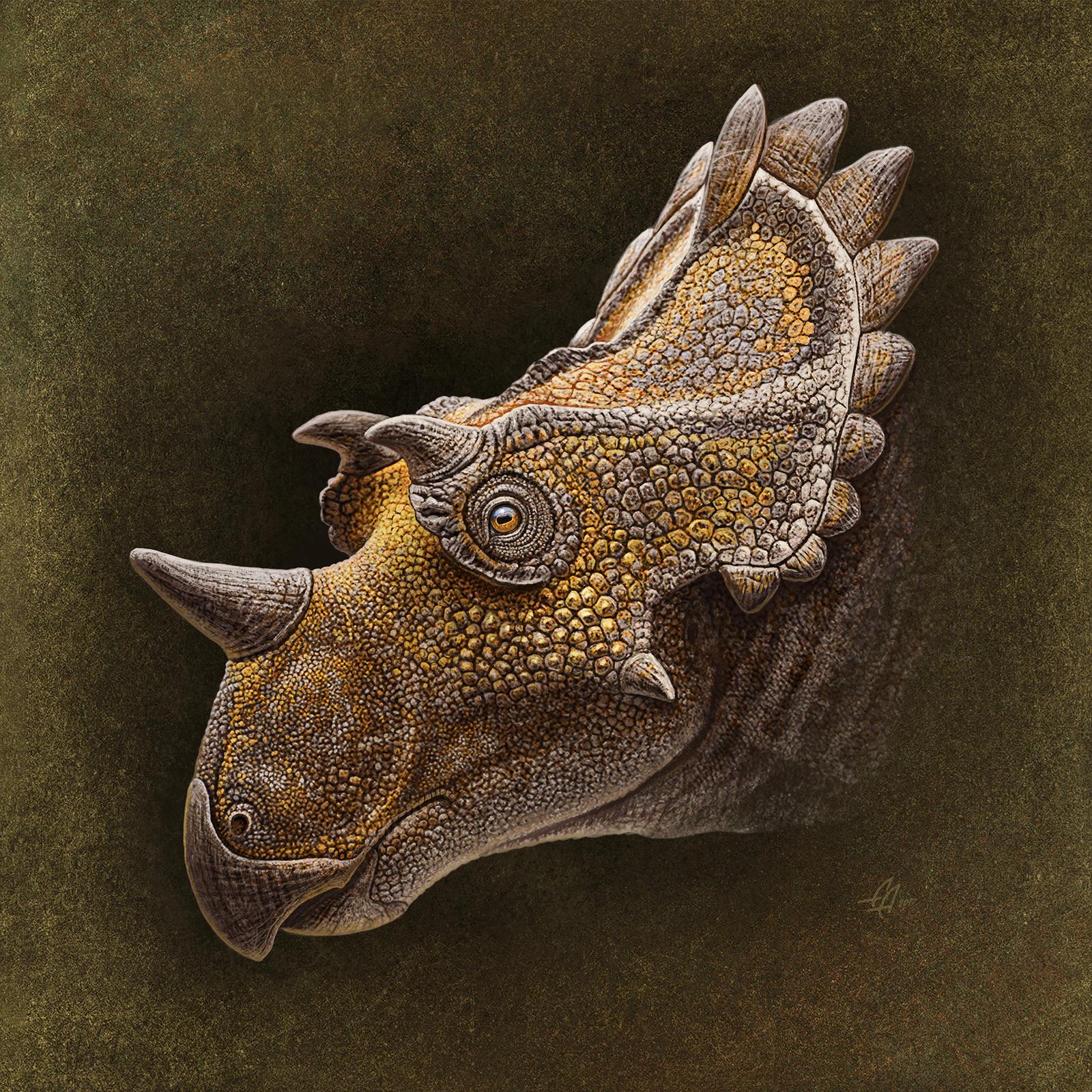 Regaliceratops (portrait) by Olorotitan