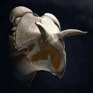 Medusaceratops lokii