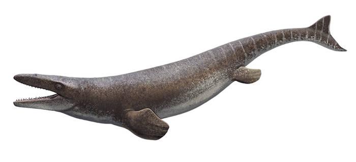 Mosasaurus hoffmani