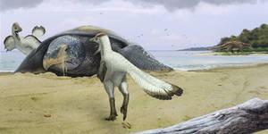 Protostega and dromaeosaurs
