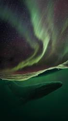 Arctic mosasaur