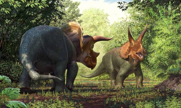 Injured Triceratops
