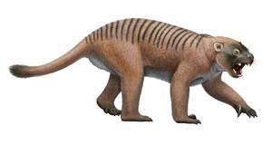 Thylacoleo sp.