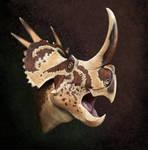 Stellasaurus