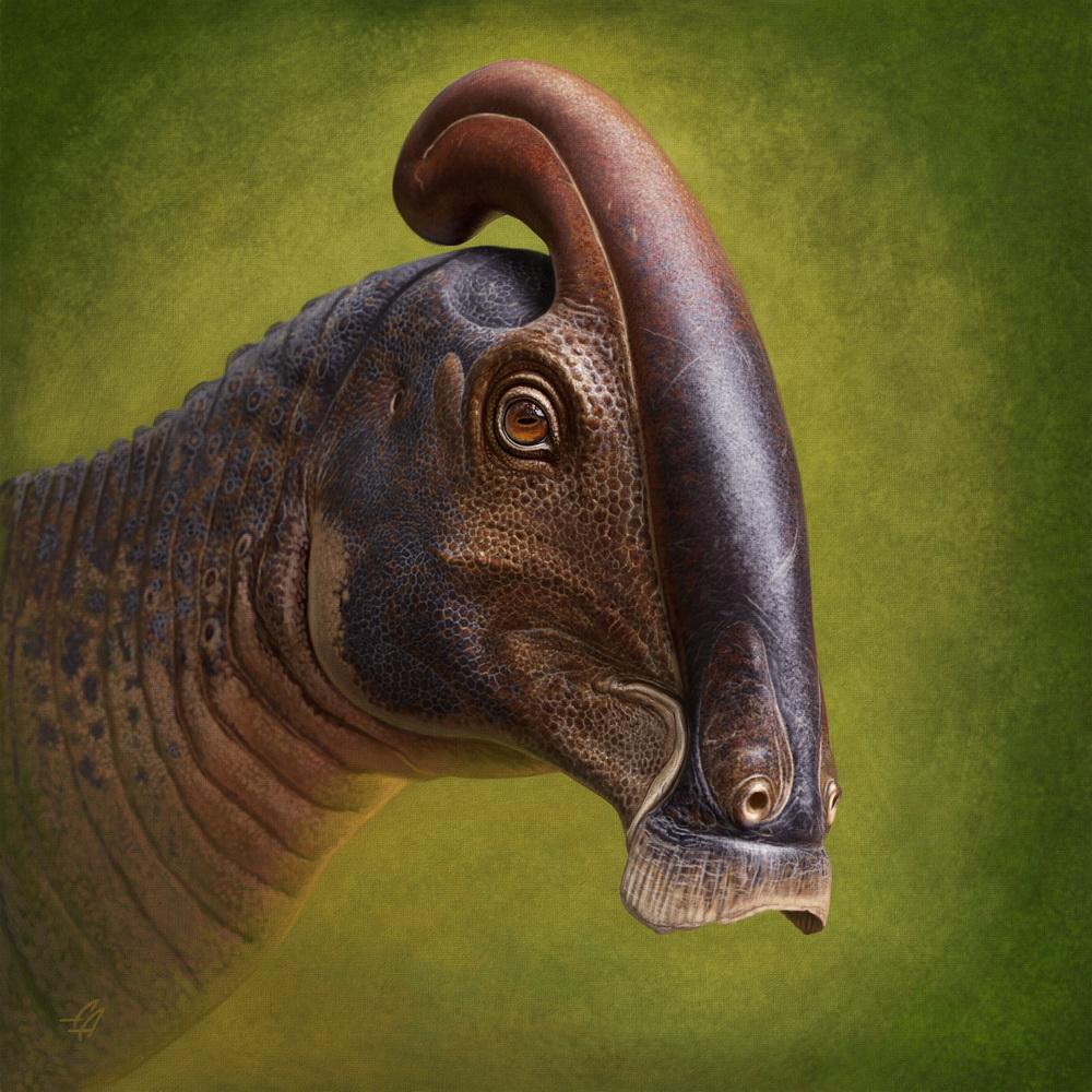 Parasaurolophus cyrtocristatus