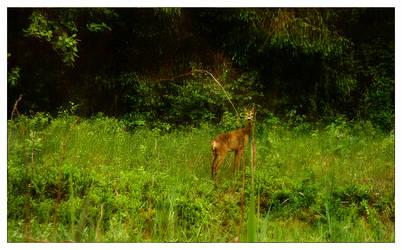 Quiet Look by joccedesign