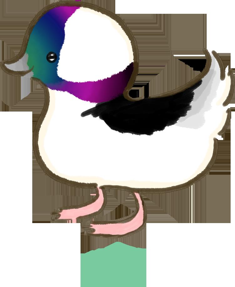 Bufflehead Ducky by Mythee
