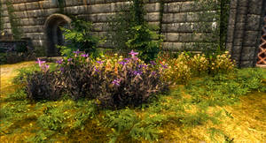 Skyrim SE: Patch of flowers in Solitude