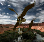 Flight Of The Hungry Eagles...