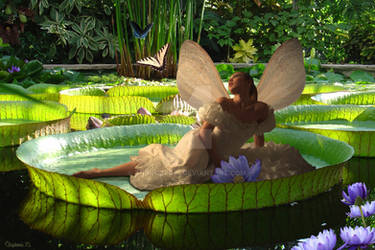 Fairy Afloat...