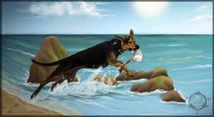 Beach dog by Dalkur