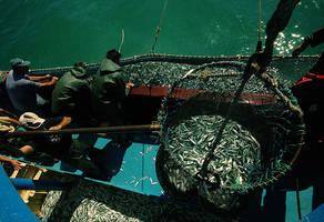 fisher IX by fotoizzet