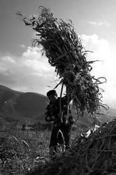 corn by fotoizzet