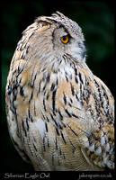 Siberian Eagle Owl by JakeSpain