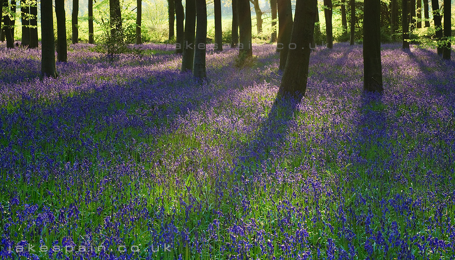 Shadows of Spring by JakeSpain
