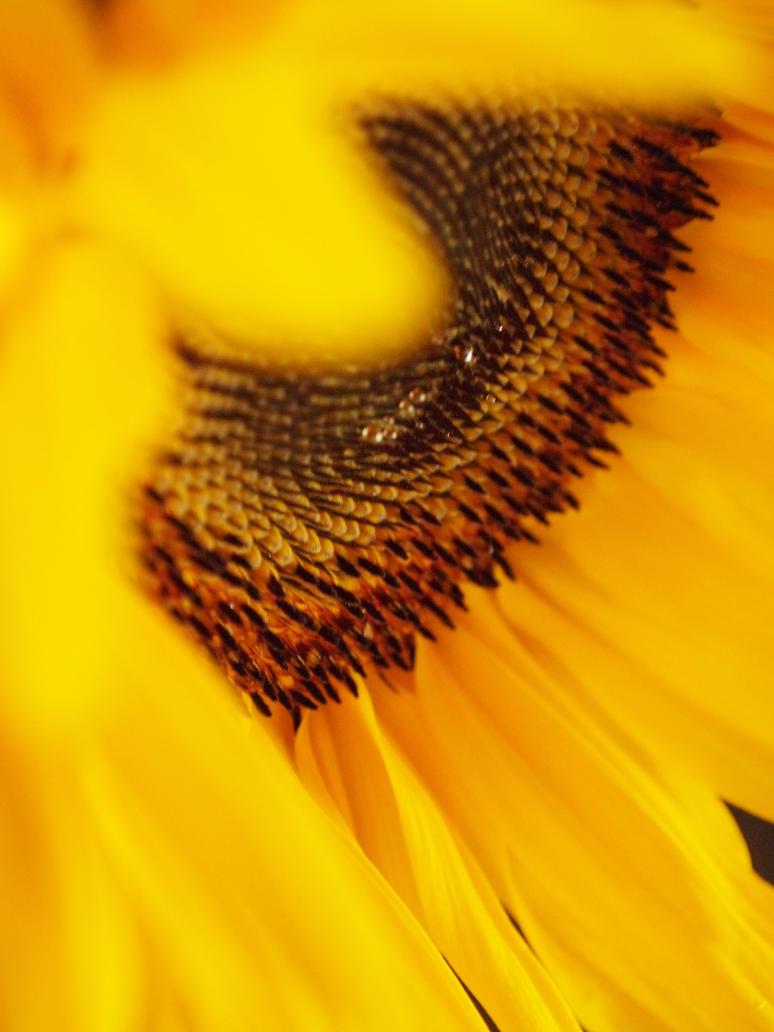 soleil:.:.. by AveEnd