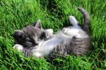 Misty Kitten