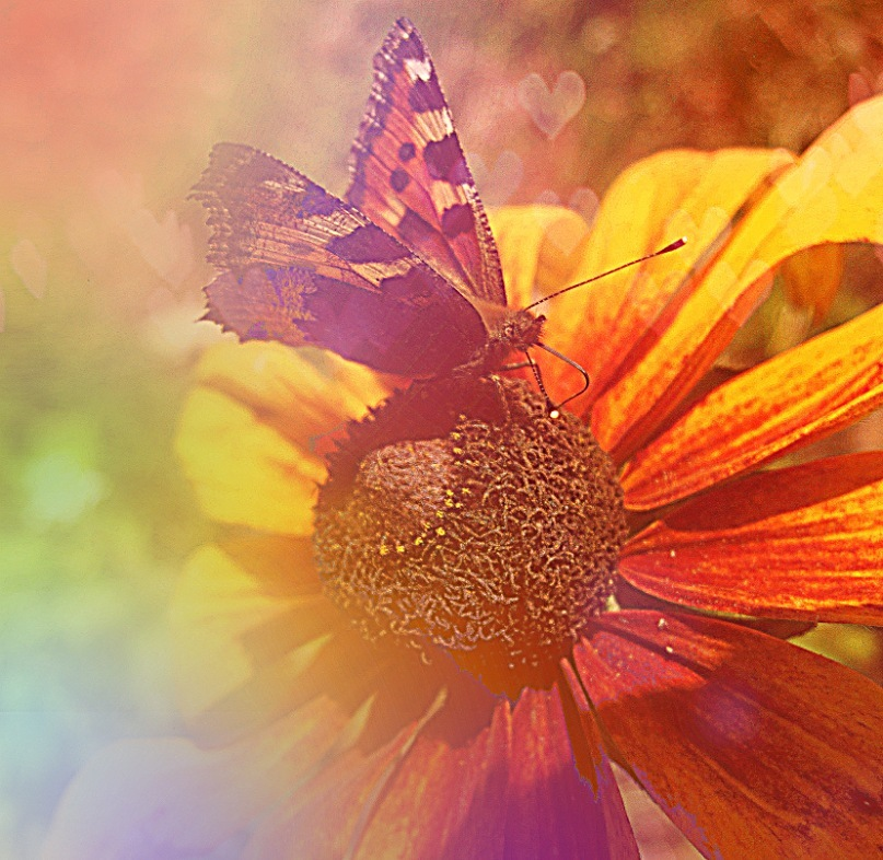 A flower of the rainbow by AnastasiaSia