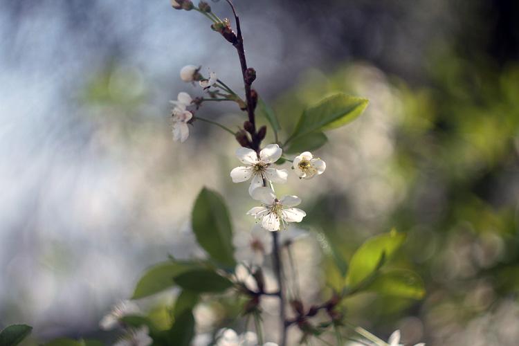 Spring by AnastasiaSia