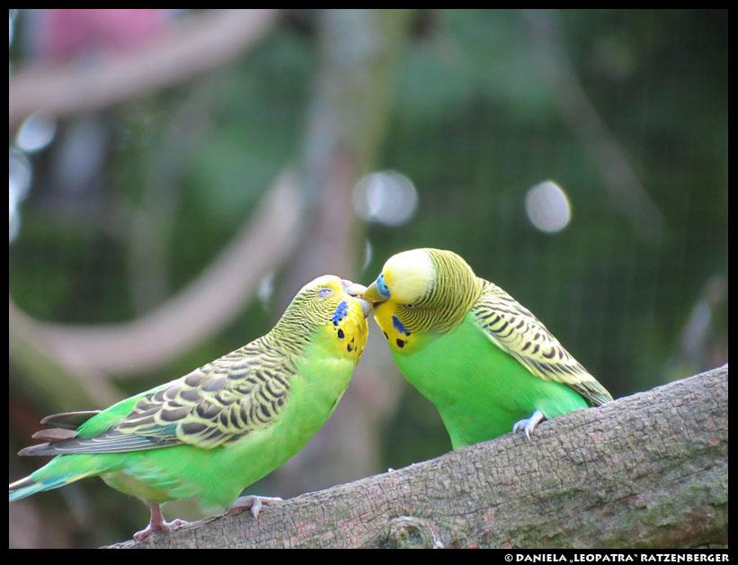 Kisses by leopatra-lionfur