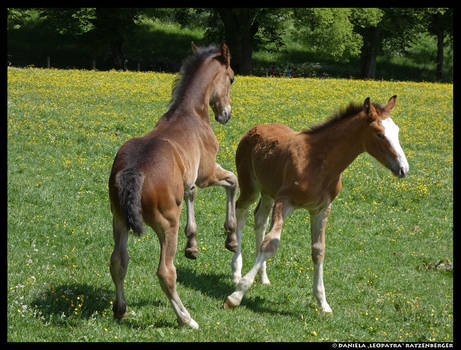 Foals at Play