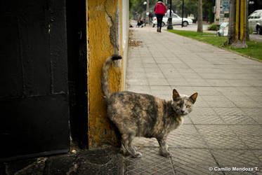 Tigno (Entropias) by Camilofotografo