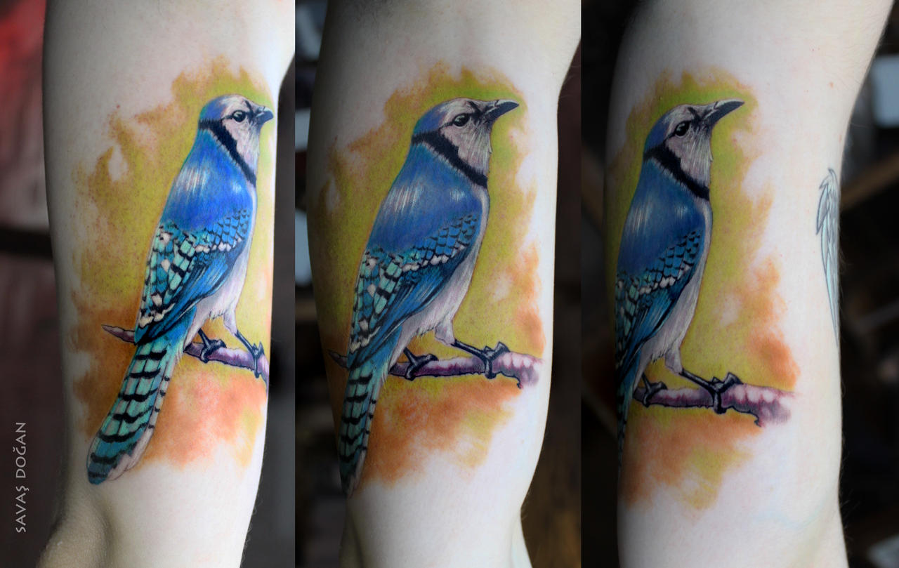 blue jay bird tattoo by moviemetal3 on deviantart