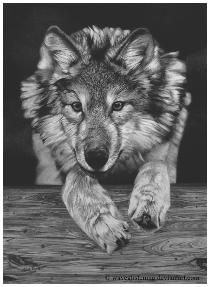 Peeking wolf by WaveGlistening