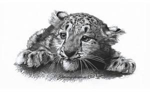 Snow Leopard Cub by WaveGlistening