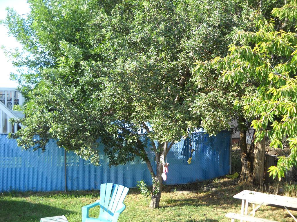backyard apple tree by oliv3r1972kadett on deviantart