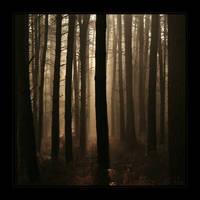 Twyfords morning pines