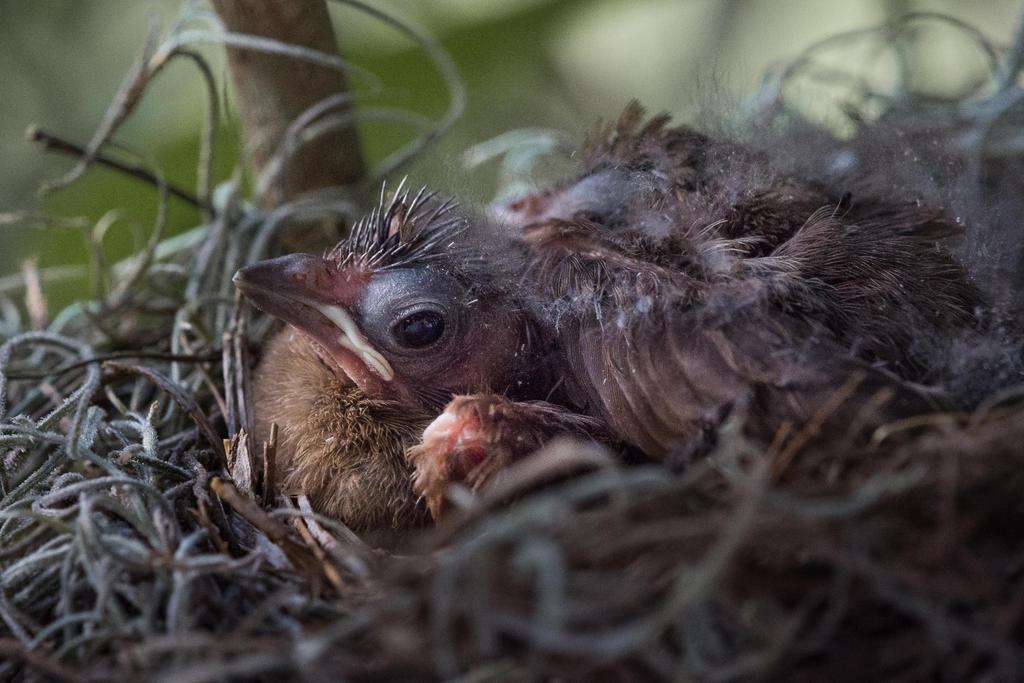 Baby Cardinal by speedofmyshutter