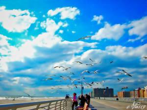 The Boardwalk-1 pe