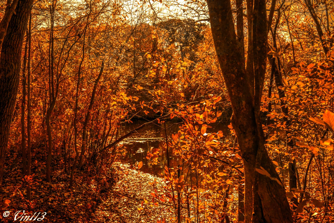 Fall Color 9 pe by vin113