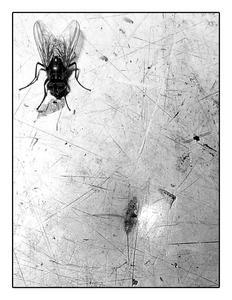 fly by backforward