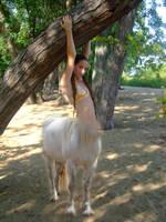 the centaur by Renstock