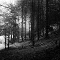 dark wood at night