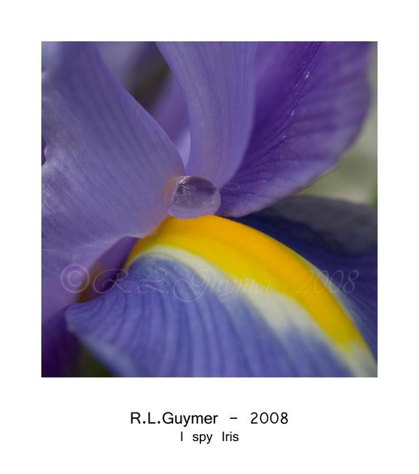I spy Iris by Popsi