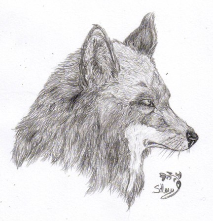 Coyote head drawing - photo#15
