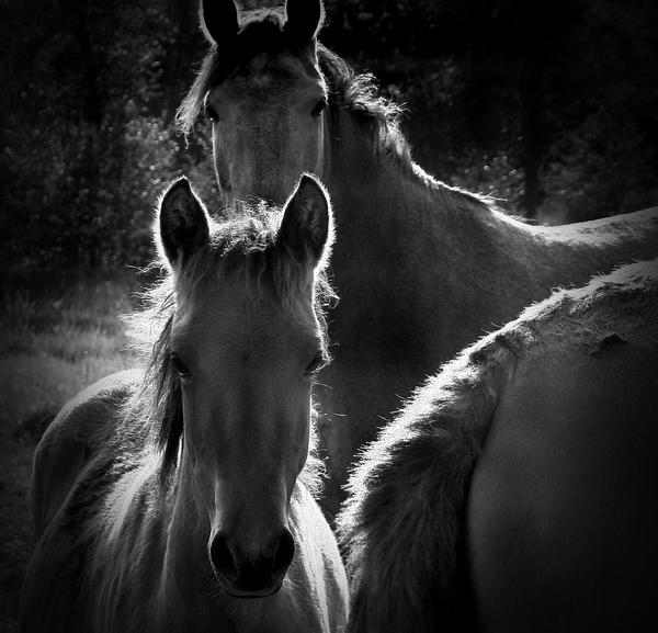 Horses by JessicaBader