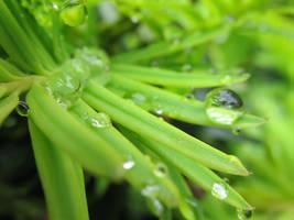 Raindrops 28