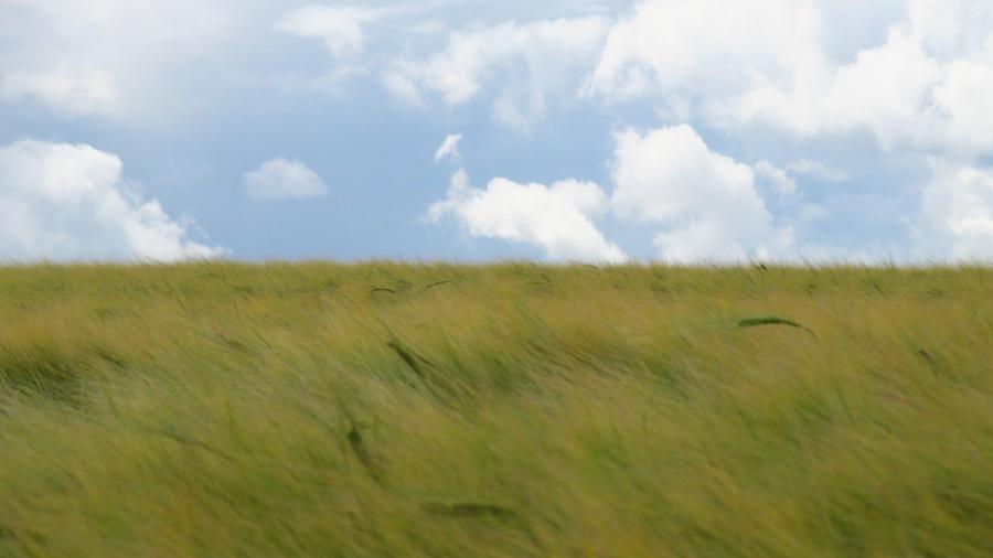 Wheat Field 9 by a-murmuration