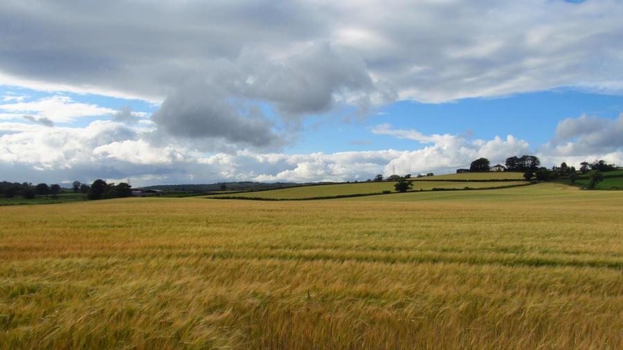 Wheat Field 10 by a-murmuration