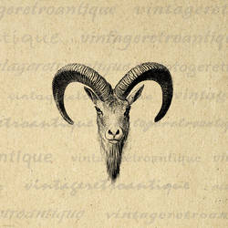 Goat Antique Digital Graphic No.481 by VintageRetroAntique