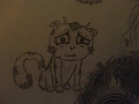 A sad cat