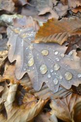 leaves fall levee breaks by lazy-haruka