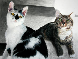 Untitled ( 2 Cats) by JustinChristenbery