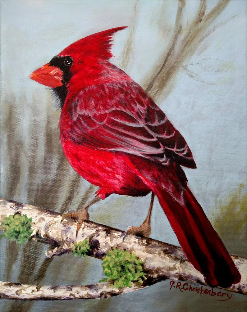Northern Cardinal by JustinChristenbery