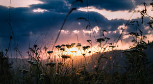 Sunset XI. by veronnisia