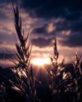 Light by veronnisia